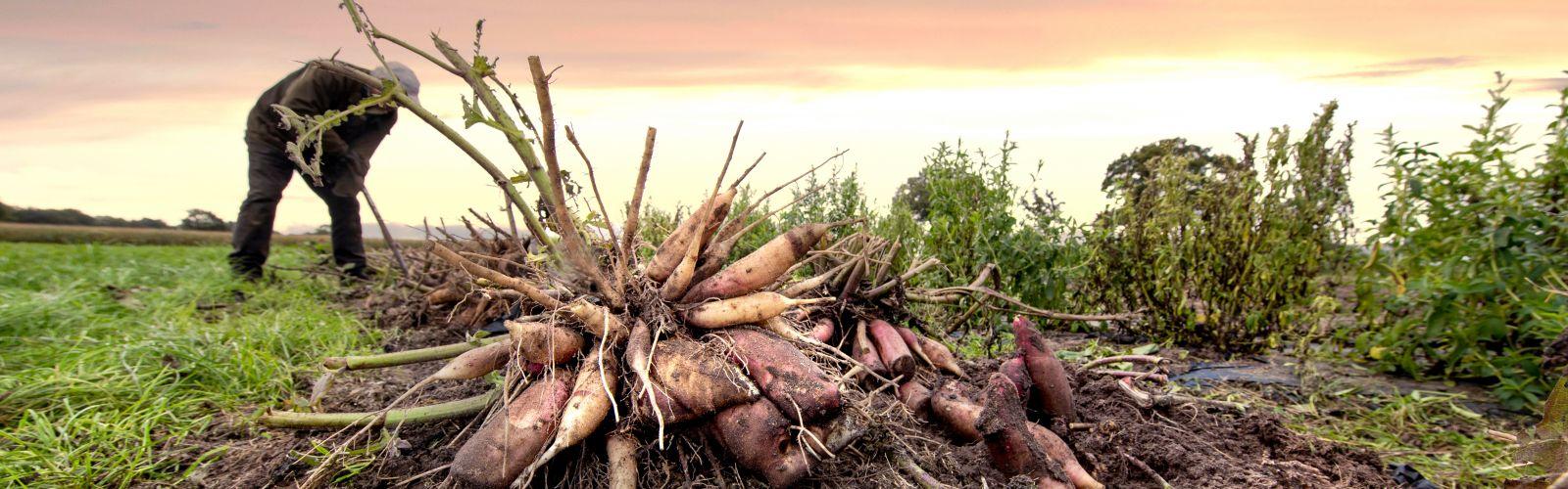 Vernieuwing agrifood in Noordoost-Brabant