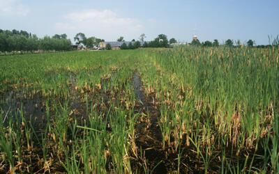 Pilot natte teelten: waterbeheer met verdienmodel