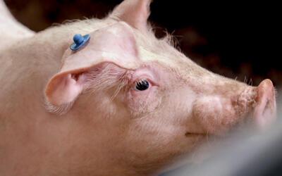 Ontwikkeling diervriendelijke en emissiearme ZERO-stal